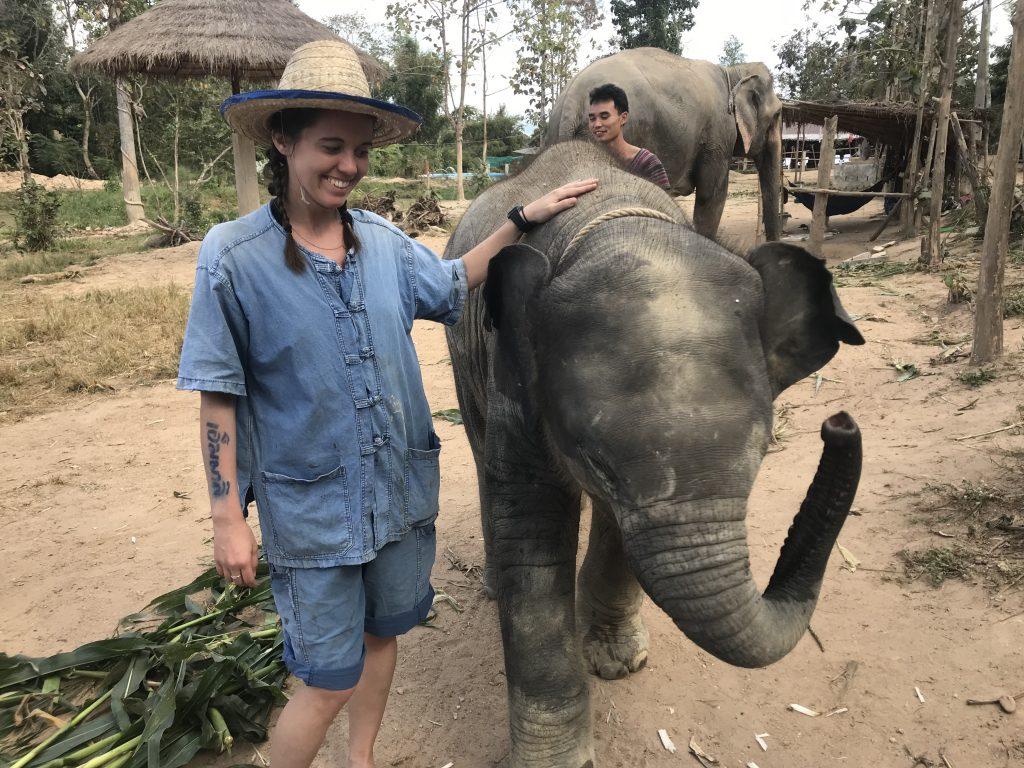 Elephants of Maerim Elephant Sanctuary